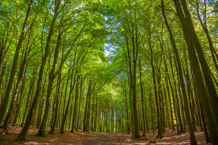 Beech forest in the National Park Jasmund near Sassnitz on the island of Rugen Reklamní fotografie