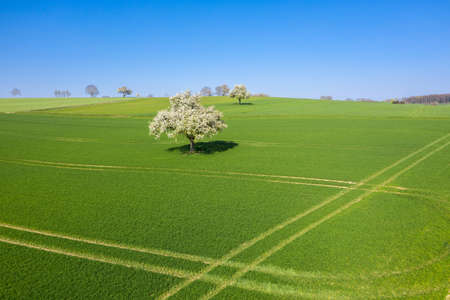 Aerial view with flowering apple tree in the middle of the surrounding agricultural landscape near Walzbachtal-Joehlingen. Joehlingen is a small village in the Kraichgau region of Germany
