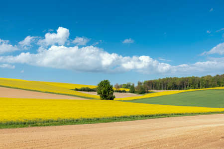 Agricultural landscape with rape field in Walzbachtal-Johlingen. Joehlingen is a small village in the Kraichgau region of Germany Archivio Fotografico - 164298028