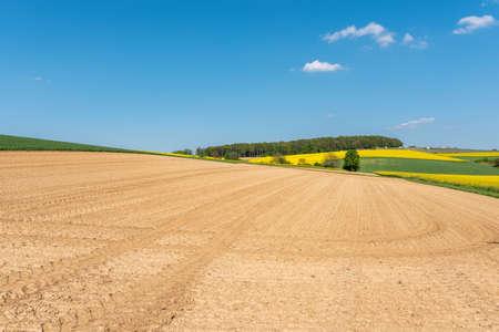 Agricultural landscape with rape field in Walzbachtal-Johlingen. Joehlingen is a small village in the Kraichgau region of Germany Archivio Fotografico - 164298034