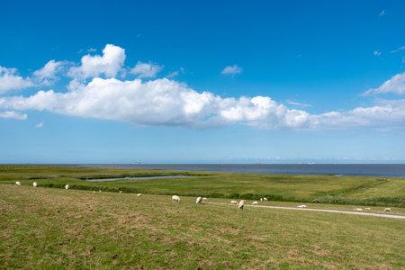 Landscape with salt marshes and sheep. Fedderwardersiel in East Frisland in Germany.