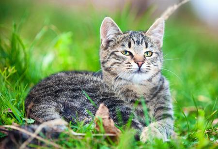 sunning: Cute cat sunning itself happily outdoors