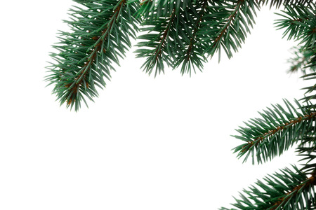 string together: A sprig of pine, isolated on a white background. Use alone or add your own decorations. Or duplicate and string together to make your own garland!