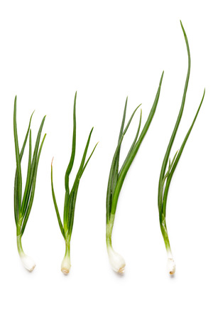 bulb and stem vegetables: green onions on white background Stock Photo