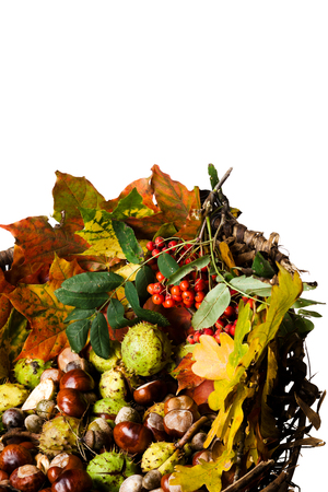 rowanberry: Wicker basket with autumn fallen leaves, chestnuts, and Rowanberry, isolated