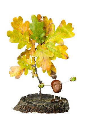 tree stump: Oak Leaf with Tree stump and Chestnut man on white background