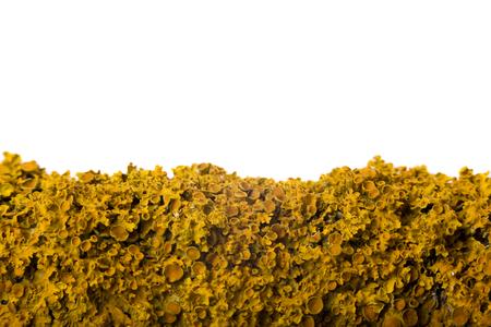 Lichen on tree macro