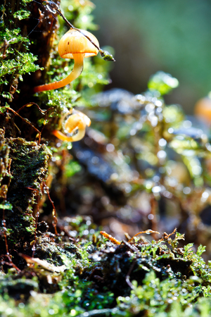 cepe: wet moos and fungi macro at forest Stock Photo