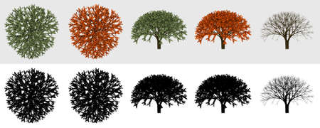 visualisation: Some views of tree render for 2D visualisation Stock Photo