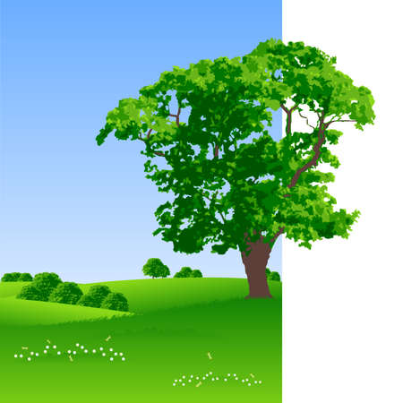 rural area: Summer landscape with trees and flowers vector illustration