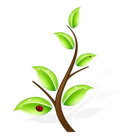 Résumé arbre vert à l'ombre et la coccinelle
