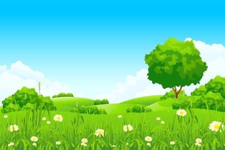 Groen landschap met bomen en wolken Vector Illustratie