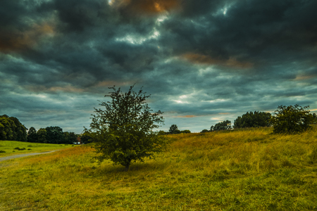 Alone Old oak tree on dandelion meadow with Blue cloudy Sky at spring in the Eifel germany Stock Photo