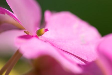 Roze bloem in zeer hoog detail