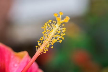 anthers: Extreme close up of a colourful flower stamen and stigma.
