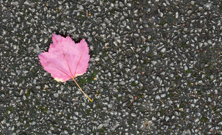 red carpet background: Lonely colourful fallen autumn leaf on a pavement