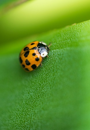 black textured background: Ladybug on a green leaf texture