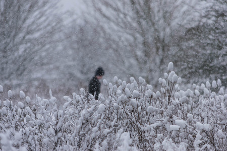 Man walking in the snowstorm in the forest.
