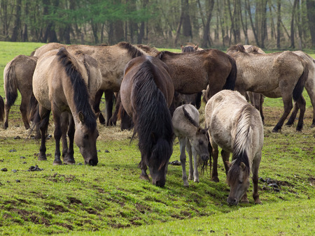 herd: herd Stock Photo