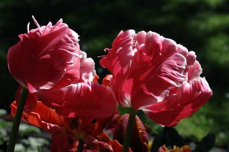 pflanzen: garten Stock Photo