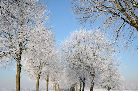 weiss: winter