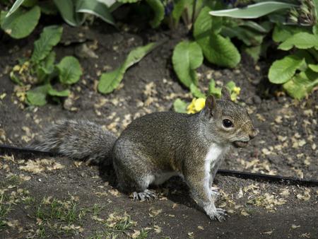 squirrels: squirrels