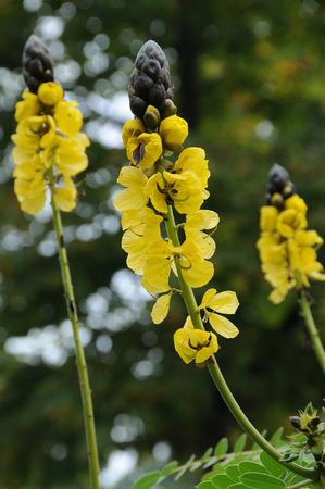 yellow: yellow plant