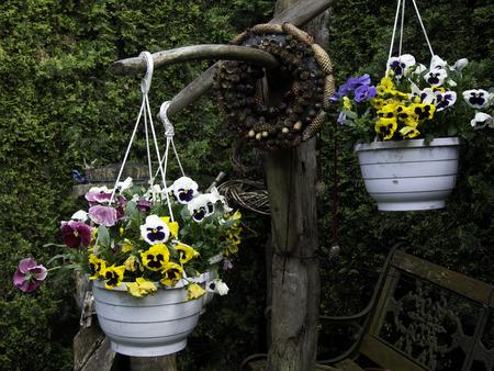 hanging basket: Hanging Basket