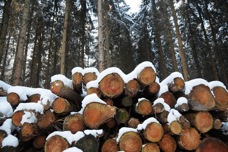 spar: wood Stock Photo
