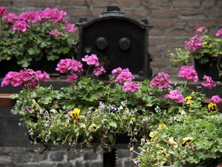 maas: flowers