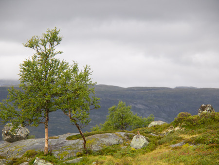 hardanger: tree