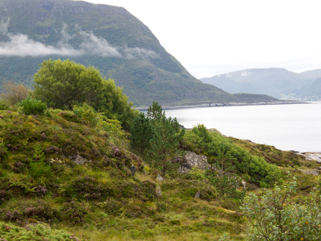 grune: fiord Stock Photo