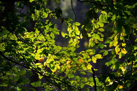 grune: green Stock Photo