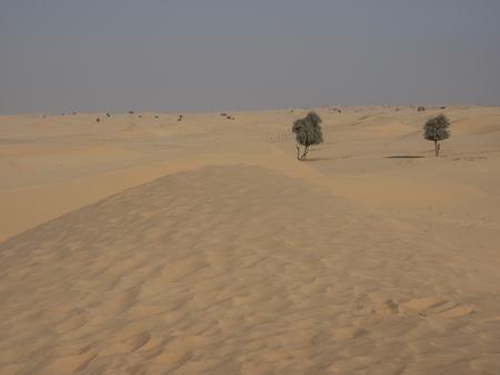 arabia: Arabia Stock Photo