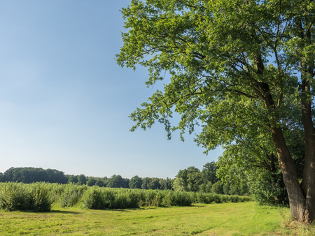 natue: tree