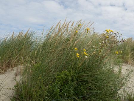 dune: Dune