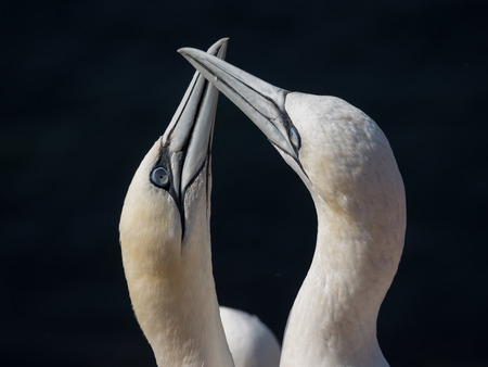 beak: beak