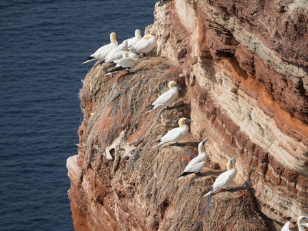 helgoland: voegel on helgoland