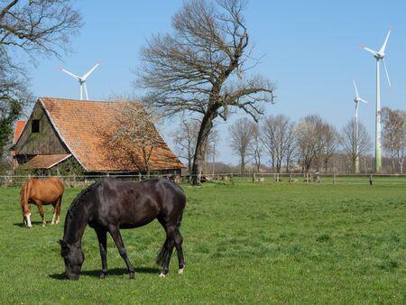 Horses on a meadow in Germany Standard-Bild