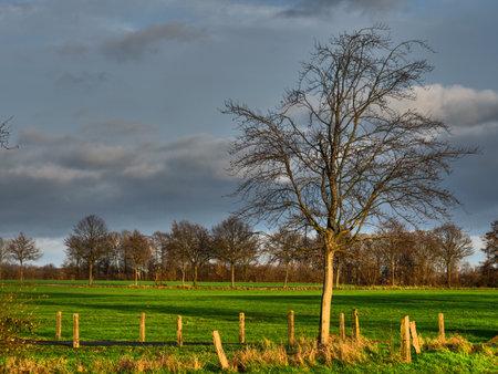 sunny winter day in westphalia Standard-Bild