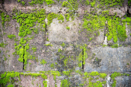 dense mats: mosses are small flowerless plants that usually grow in dense green clumps or mats Stock Photo