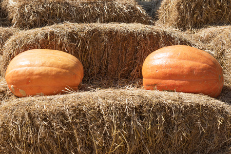 copy sapce: two pumpkins on hay with copy sapce Stock Photo