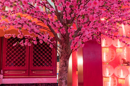 japanese apricot flower: Pink chinese plum flower or japanese apricot flower with red light chinese new year festival, plum blossom