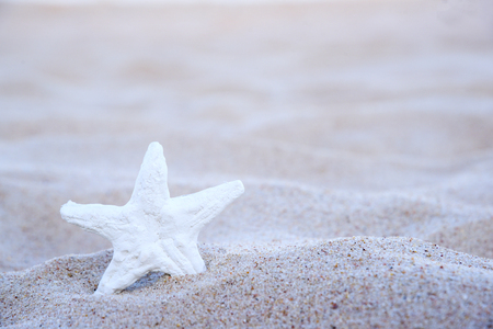 Starfish on the beach with copy space Stock Photo
