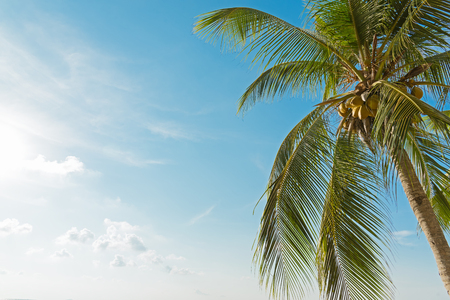 Coconut or palm tree with blue sky and clouds on the beach in Thailand