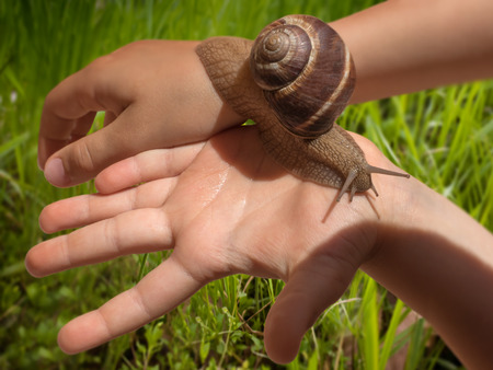 grape snail: Large grape snail slowly crawling on kids hands with bright grass field in the background. Stock Photo
