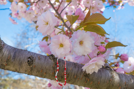 Beautiful blossoming pink sakura branch with traditional bulgarian spring talisman - handmade red and white bracelet Imagens