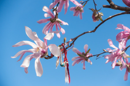 Blossoming pink magnolia and traditional bulgarian spring talisman - handmade red and white bracelet martenitsa