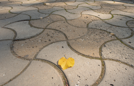Single yellow linden leaf on pavement tile, copy space autumn background. Imagens