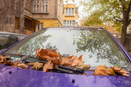 Bright purple car hood covered with fallen autumn leaves. Imagens